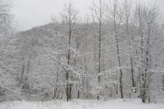 snow-Mar_2-scaled