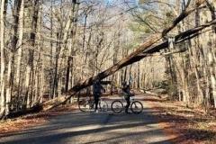 tree_Stop