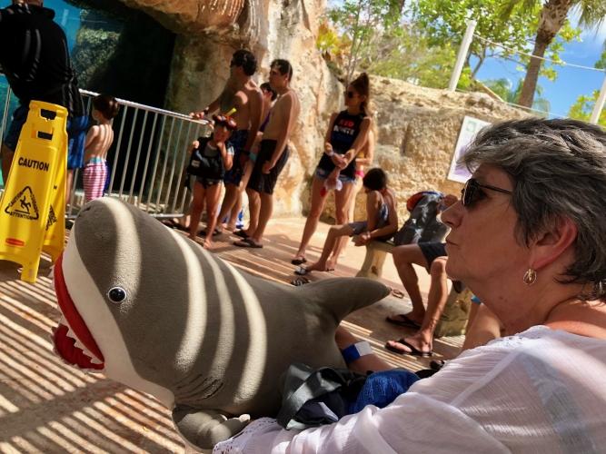 Gaga-Shark