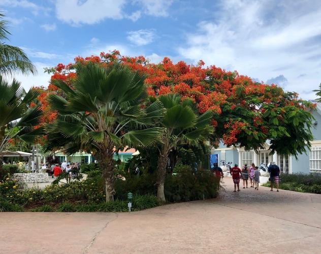 Tree-In-Bloom2