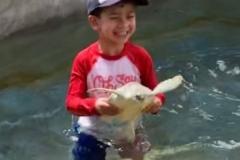 Hold-Turtle-N