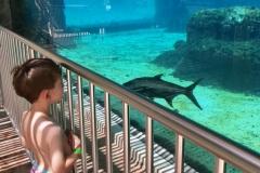 Nolan-At-Shark-Info-class3