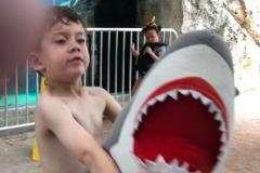 Nolan-gives-Shark-To-Gaga