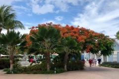 Trees-In-Bloom
