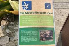 Turtle-Information