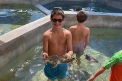 alecs-turtle
