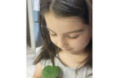 Lilly_Plant