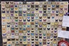 mybutterflies