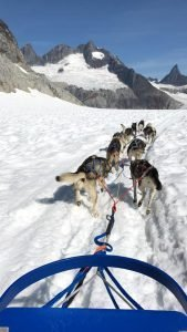 ride_in_dog_sled